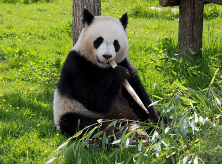 recover your search rankings after Panda